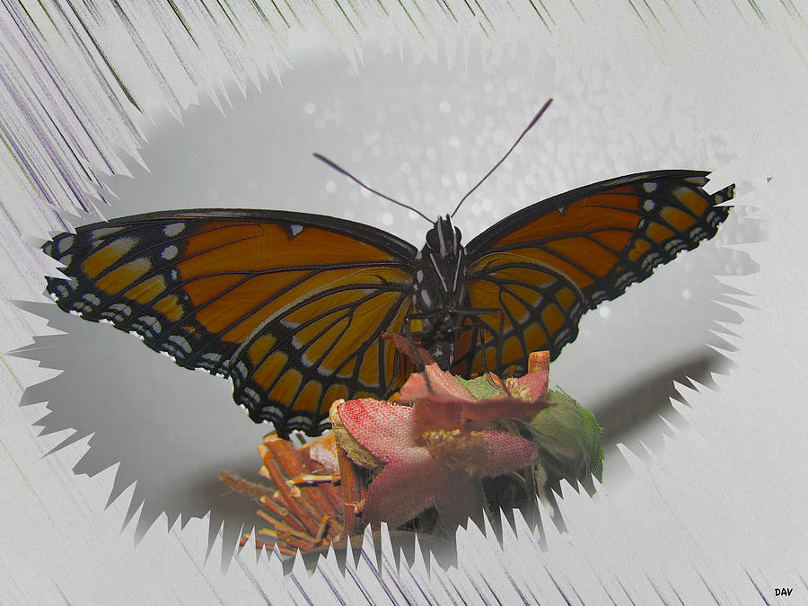 Dreamy Butterfly Photograph - Designer Butterfly Collection by Debra     Vatalaro