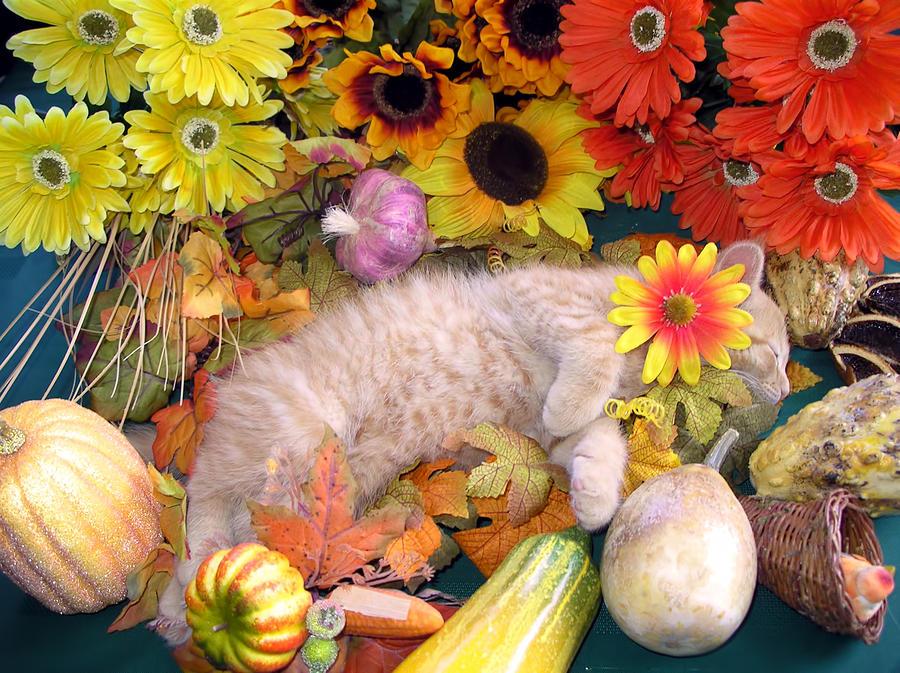 Flower Child Photograph - Di Milo - Flower Child - Kitty Cat Kitten Sleeping In Fall Autumn Harvest by Chantal PhotoPix