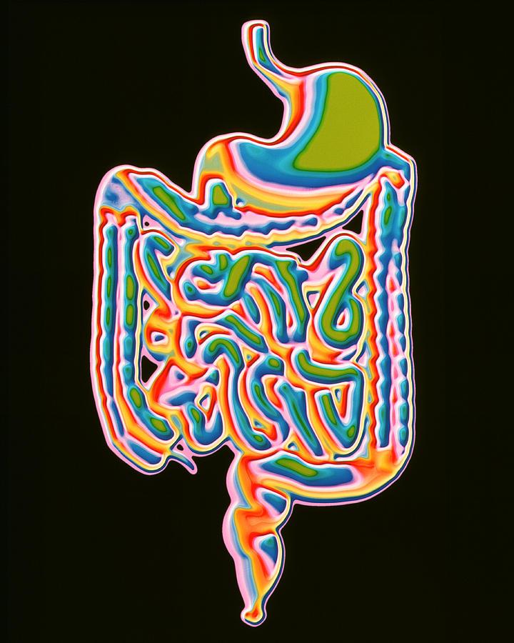 Human Body Photograph - Digestive System by Pasieka