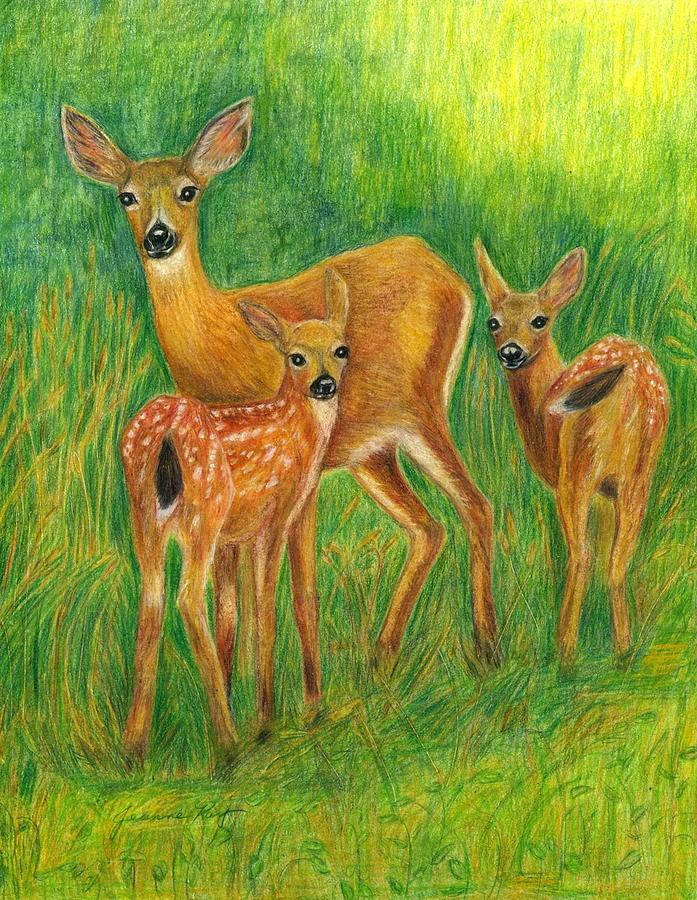 Paintings Of Doe S Close Up