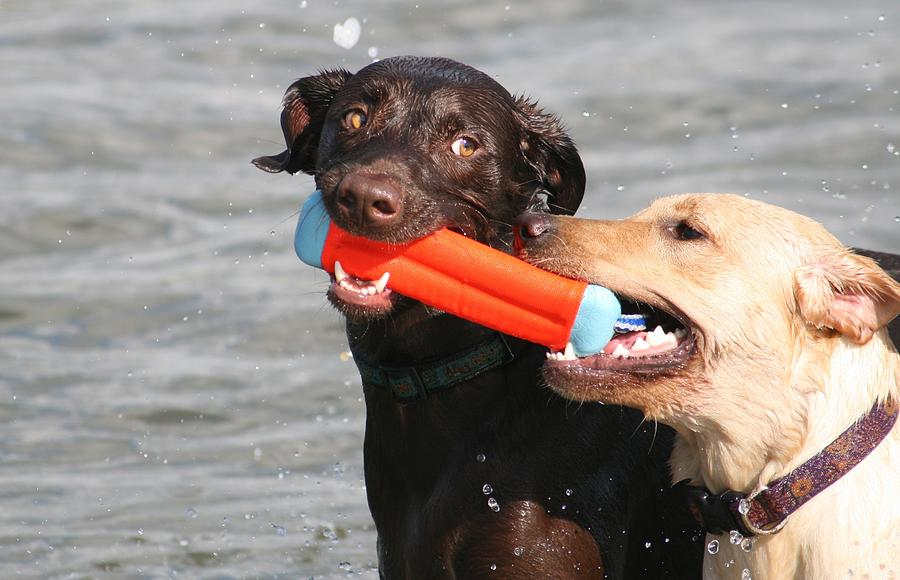 Animals Photograph - Dogs At The Beach by Valia Bradshaw