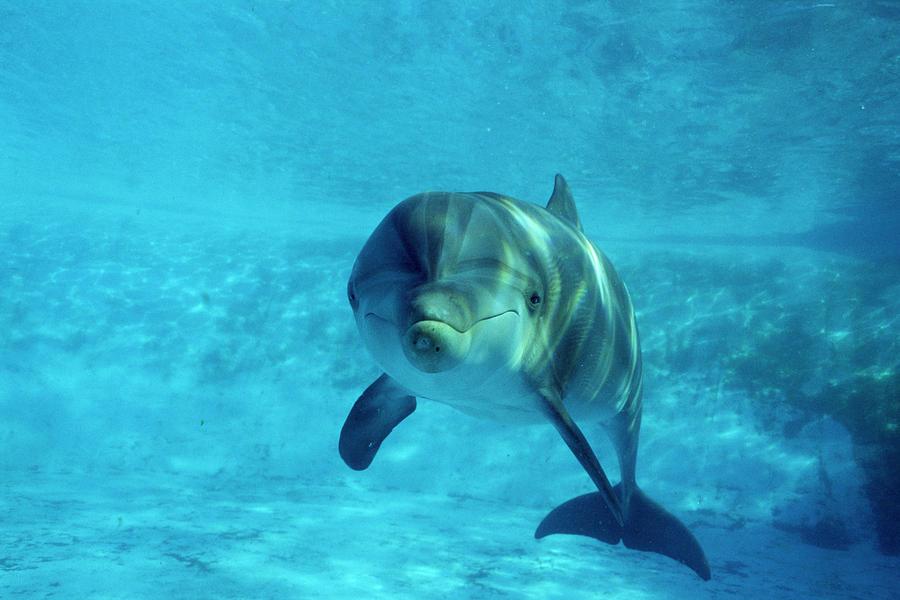 Animal Photograph - Dolphin In Captivity by Alexis Rosenfeld
