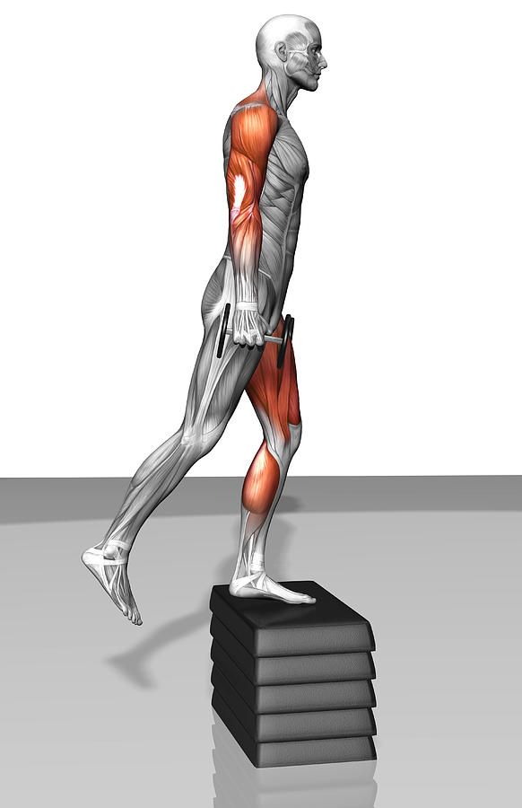 Dumbbell Step-up Exercise (part 1 Of 2) Photograph by MedicalRF.com