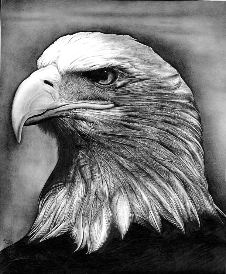 Eagle Drawing by Jerry Winick