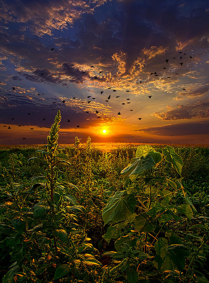 Birds Photograph - Early Bird Special by Phil Koch