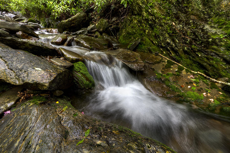 Appalachia Photograph - Enchanted Forest by Debra and Dave Vanderlaan