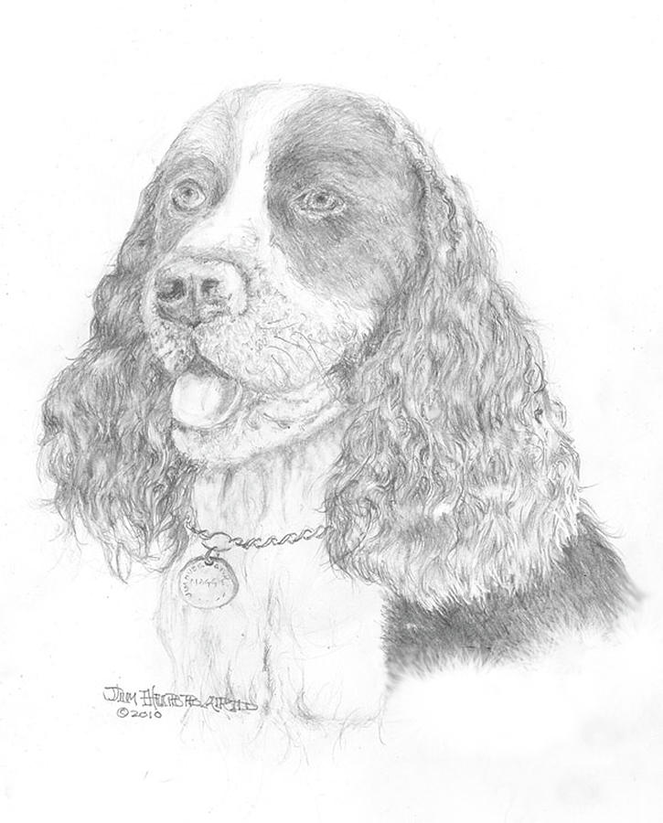 Dpringers forever free coloring pages for English springer spaniel coloring pages