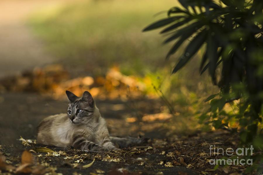 Cat Mixed Media - Evening Glow by Kim Henderson