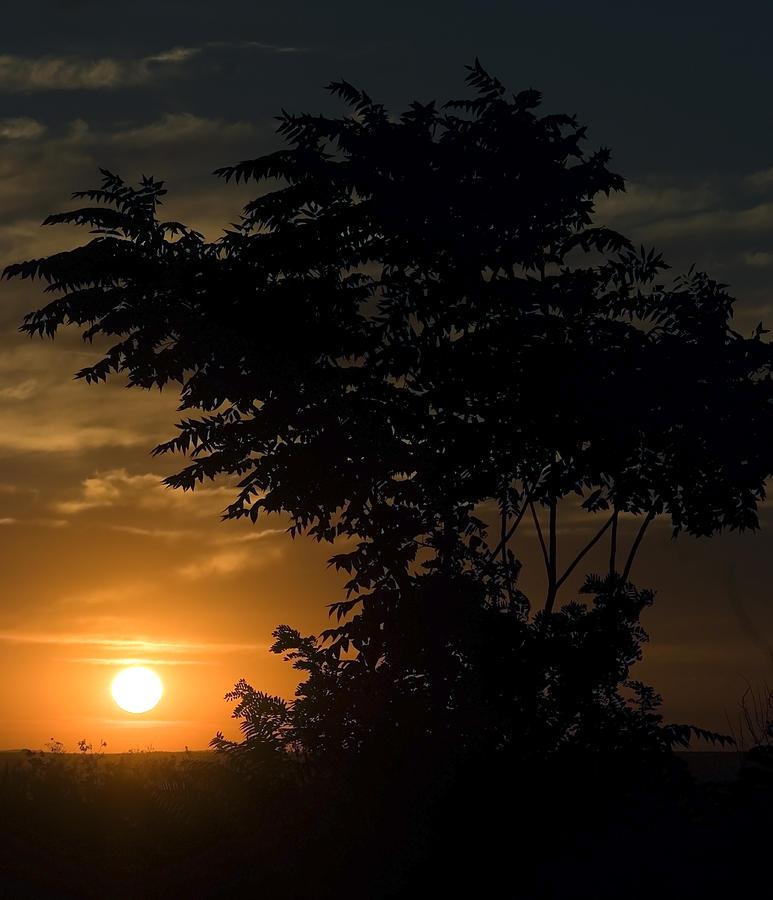 Evening Sunset Photograph - Evening Sunset  by Cliff Norton