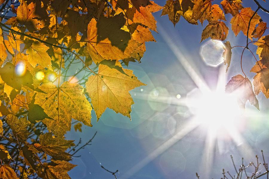 Light Photograph - Fall Colors And Sunshine, Ontario by Robert Postma