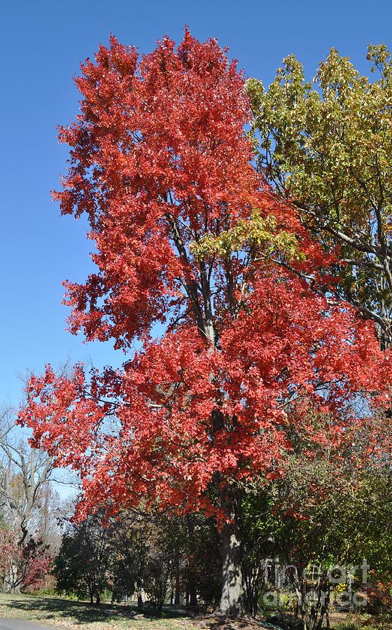 Cheekwood Gardens Photograph - Fall Colors by Denise Ellis