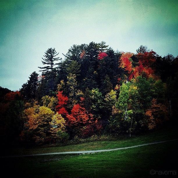 Fall Photograph - Fall Colors by Natasha Marco