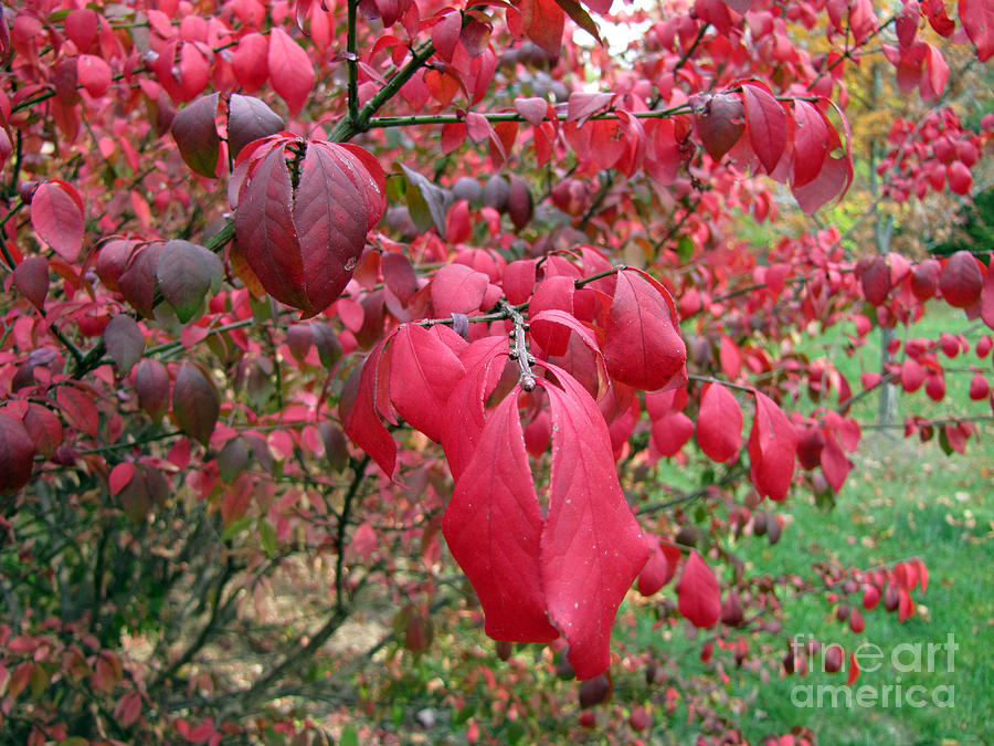 Tree Leaves Photograph - Fall Foliage by Richard Nickson