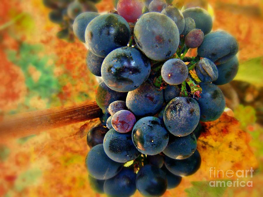 Wine Photograph - Fall Harvest by Kevin Moore