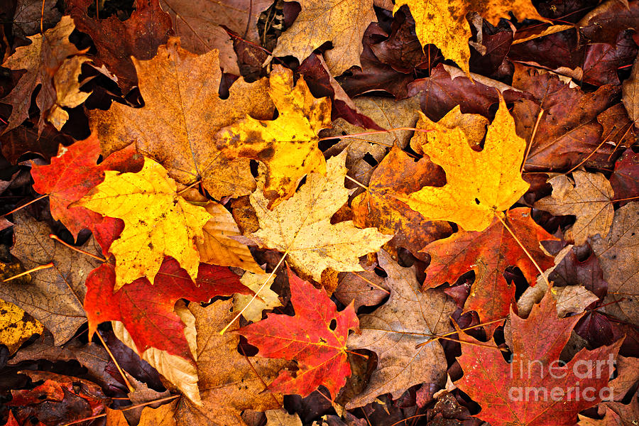 Leaves Photograph - Fall Leaves Background by Elena Elisseeva