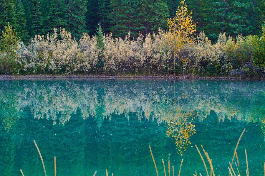 Nature Photograph - Fall Reflections by Manju Shekhar