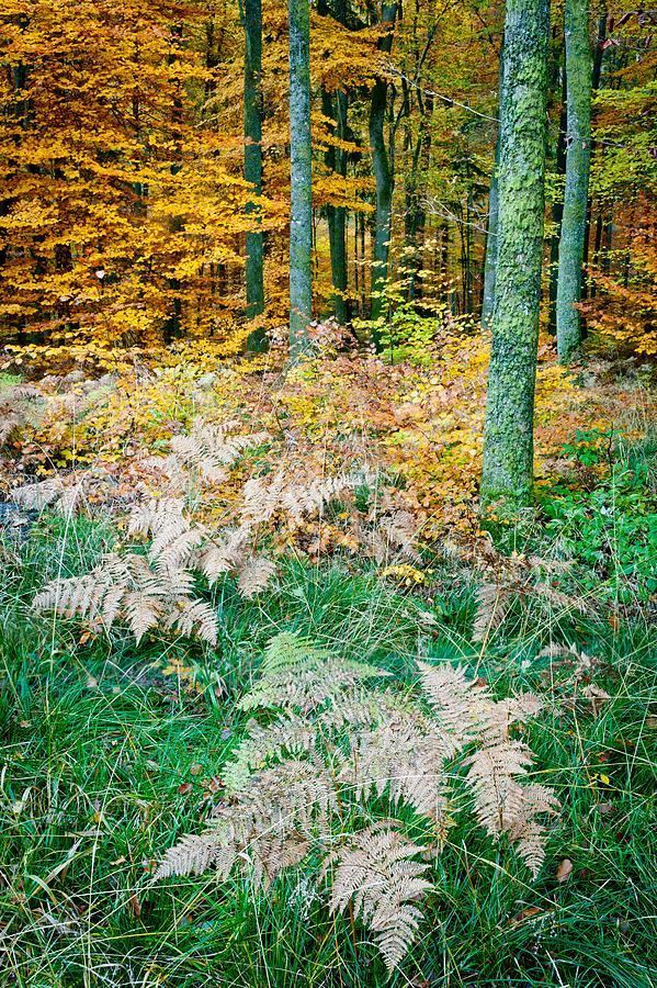 Forest Photograph - Fall Scenery by Maciej Markiewicz