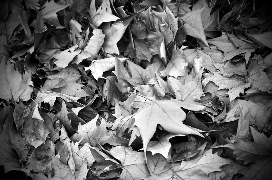 Autumn Photograph - Fallen Leaves by Fabrizio Troiani
