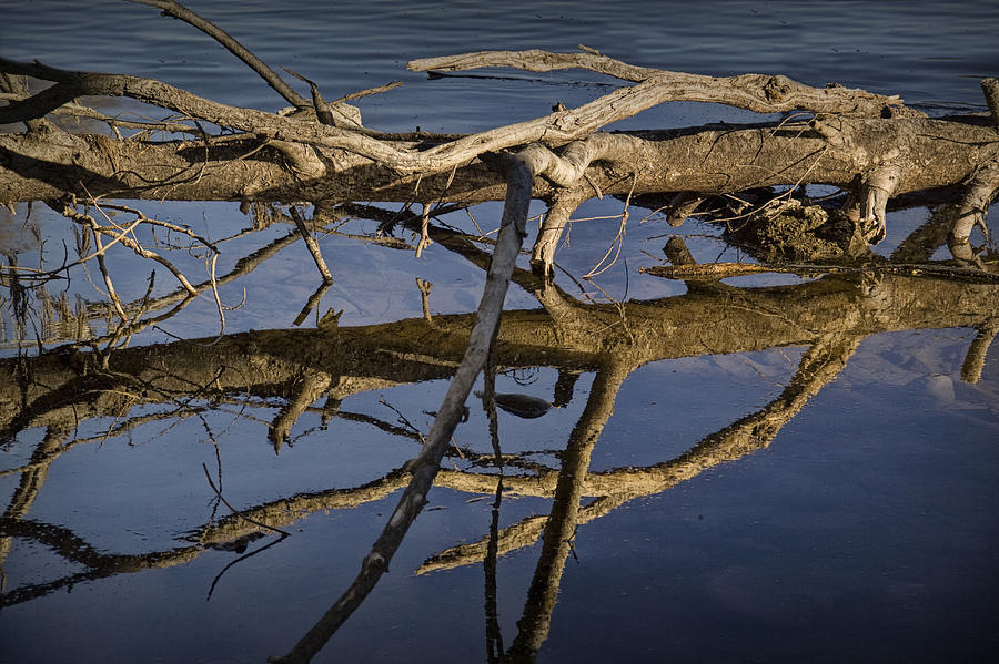 Nature Photograph - Fallen Tree Trunk With Reflections On The Muskegon River by Randall Nyhof