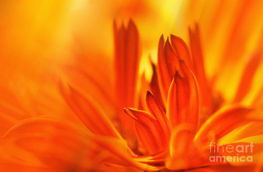 Flowers Photograph - Fire Storm  by Elaine Manley