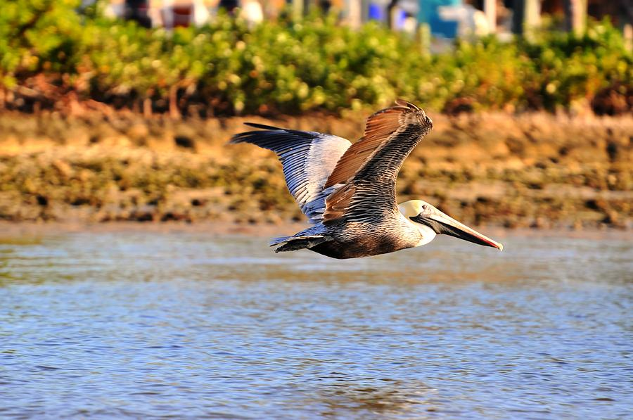 Great Blue Heron Digital Art - Flight by Barry R Jones Jr
