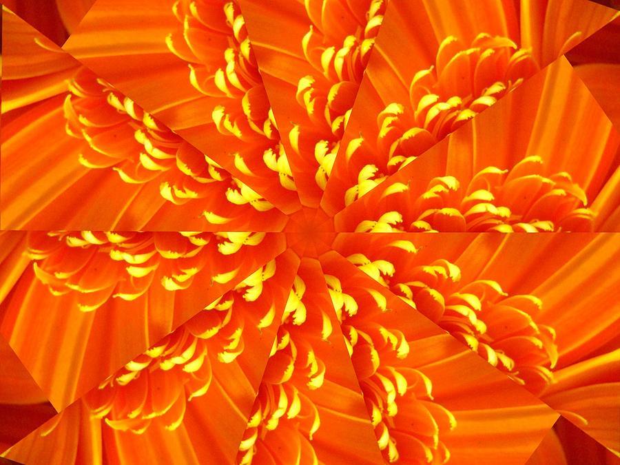 Flower Digital Art - Floral Sunrise by Rhonda Barrett