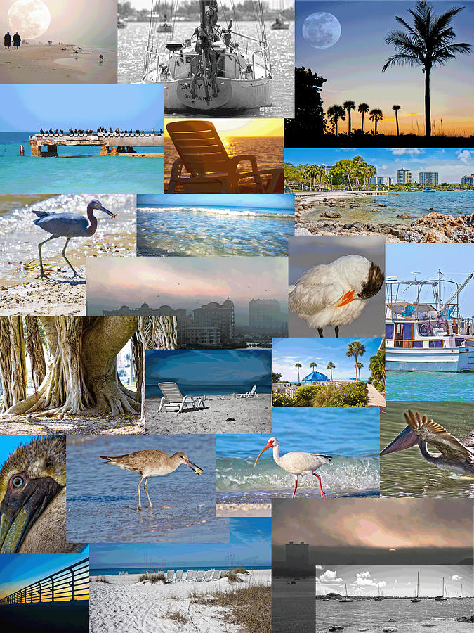 Florida Photograph - Florida Collage by Betsy Knapp