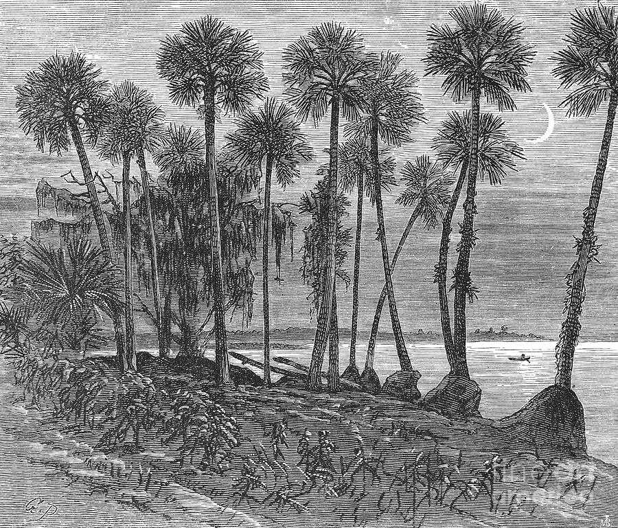 19th Century Photograph - Florida: St. Johns River by Granger