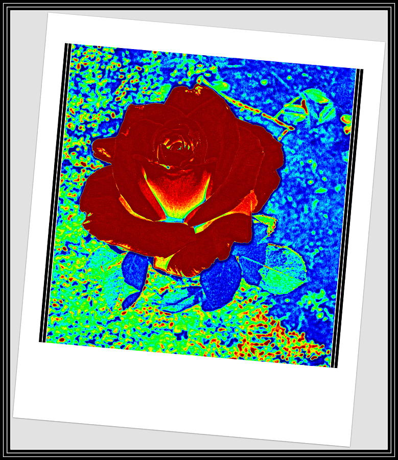 Flowers Photograph - Flowers Flowers And Flowers by Anand Swaroop Manchiraju