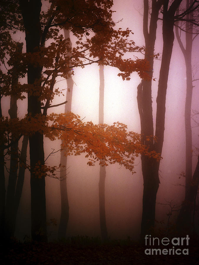 Foggy Photograph - Foggy Misty Trees by Mike Nellums
