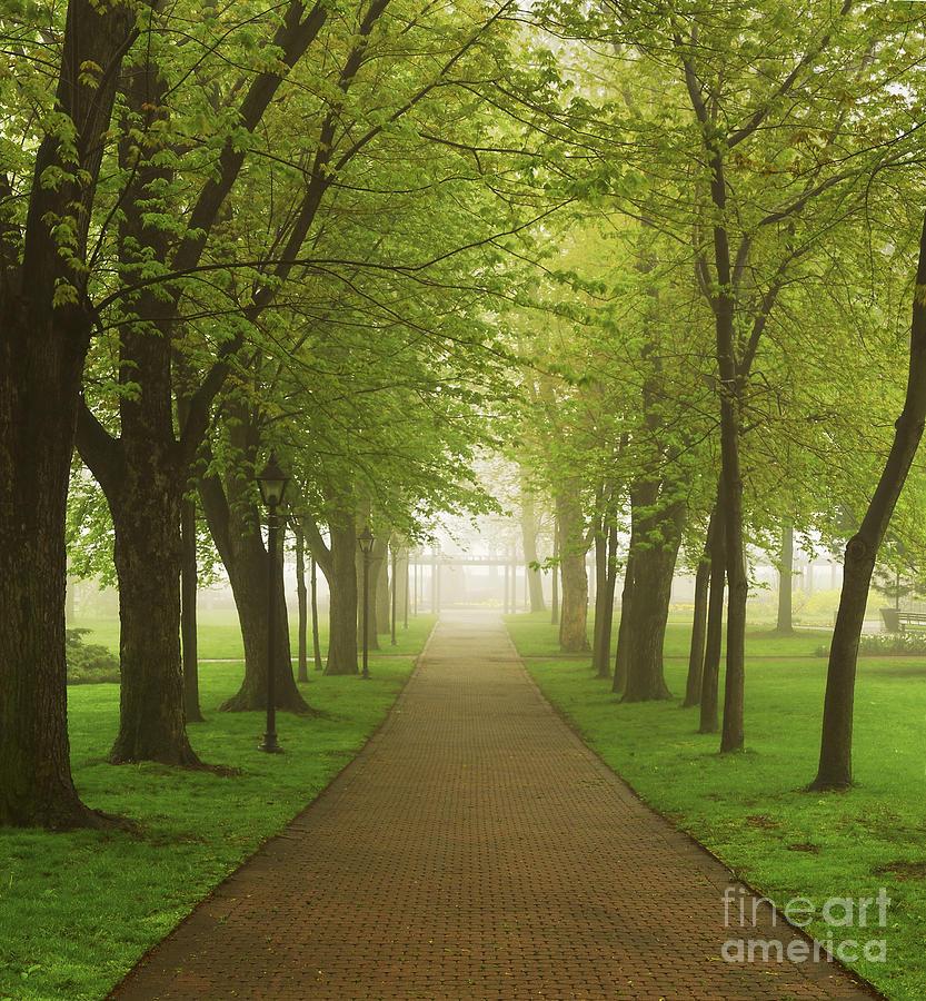 Fog Photograph - Foggy Park by Elena Elisseeva