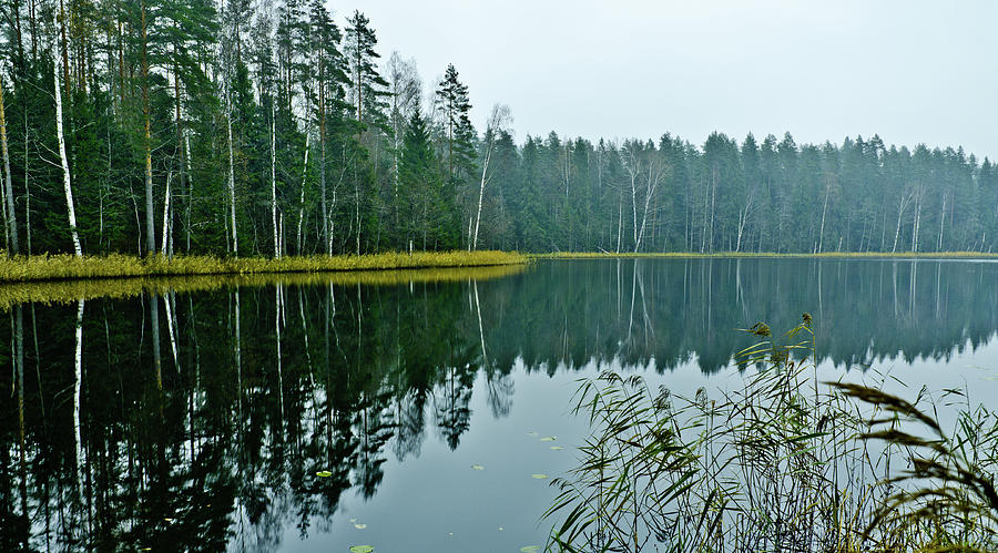 Landscape Photograph - Forest Lake by Michael Goyberg