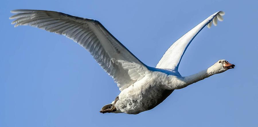 Freebird Photograph by Brian Stevens