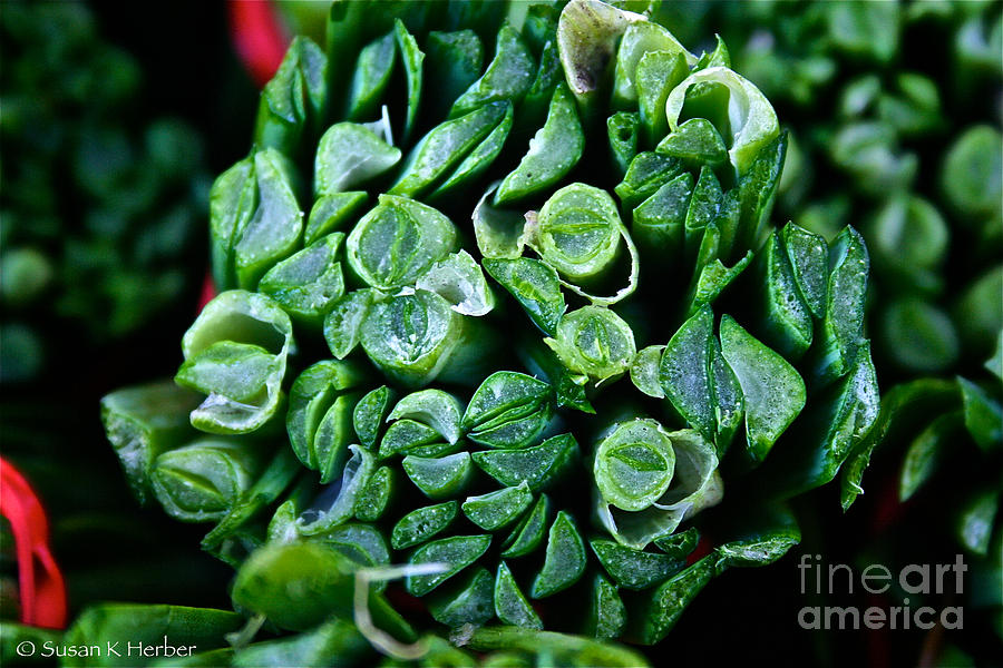 Food Photograph - Fresh Chives by Susan Herber