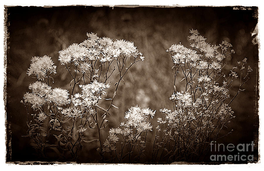 Weeds Photograph - Going To Seed by Judi Bagwell