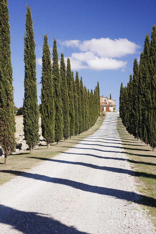 Architecture Photograph - Gravel Road Lined With Cypress Trees by Jeremy Woodhouse