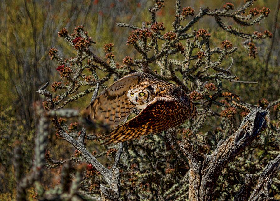 Birds Photograph - Great Horned Owl by Dan Nelson