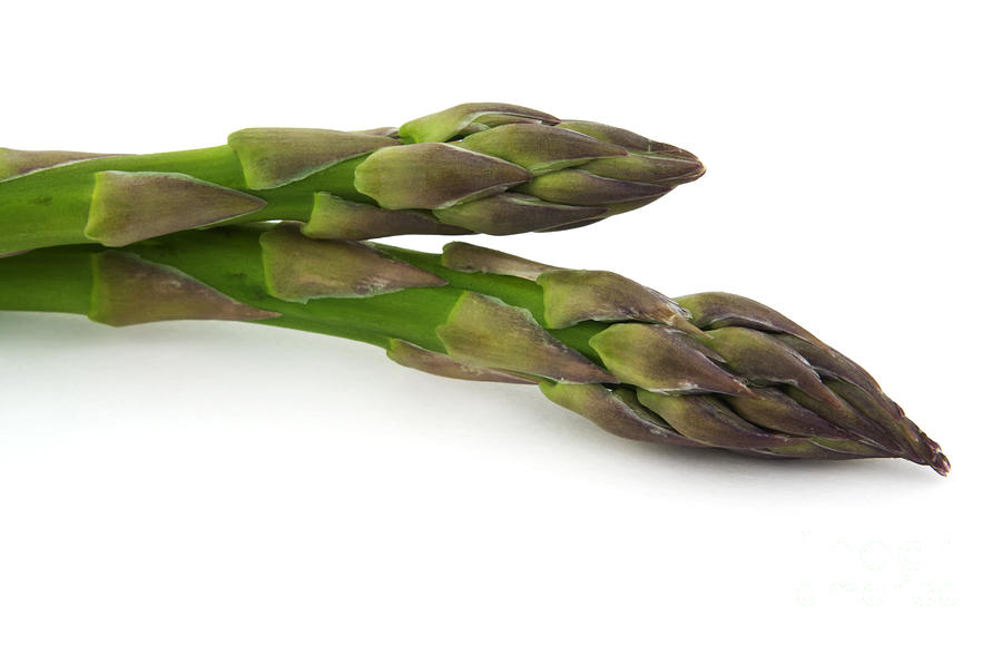 Asparagus Photograph - Green Asparagus by Blink Images