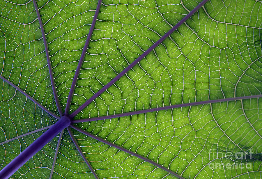 Garden Photograph - Green Leaf by Urban Shooters