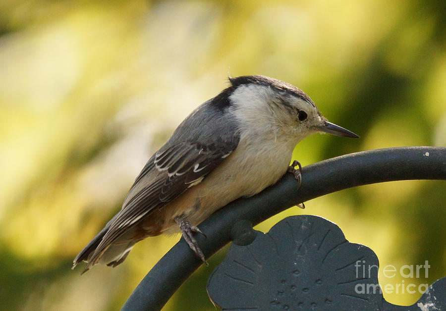 Birds Photograph - Hanging On by Lori Tordsen