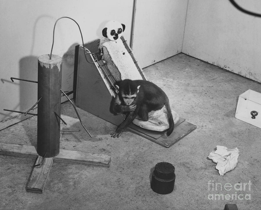 Psychology Photograph - Harlow Monkey Experiment by Science Source