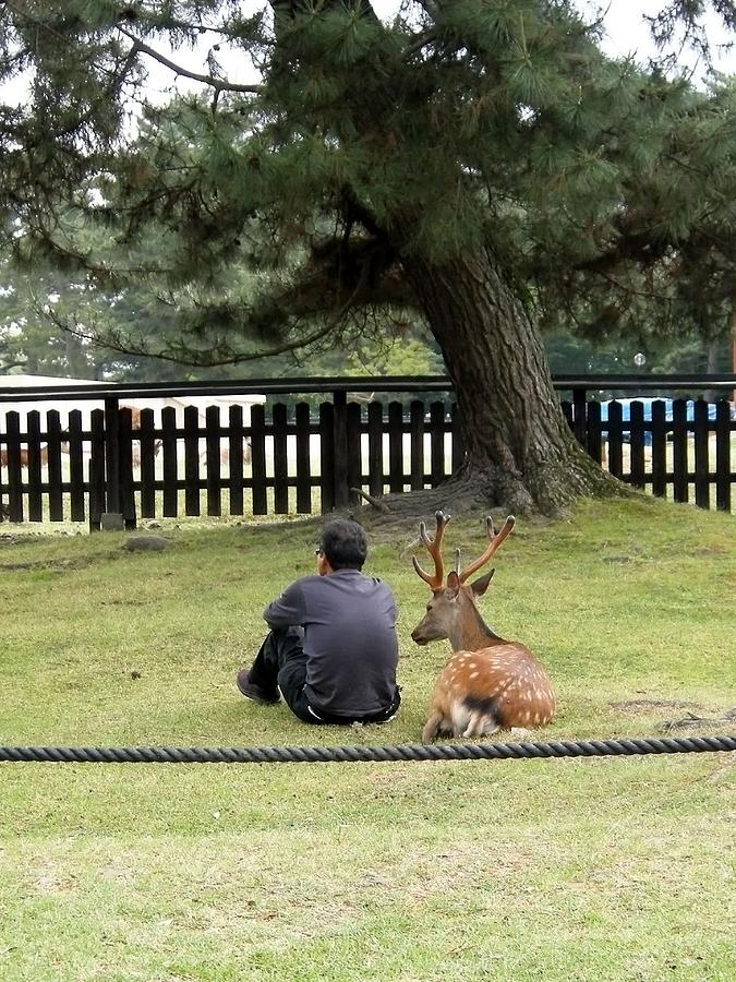 Deer Photograph - Harmony by Evgeny Pisarev