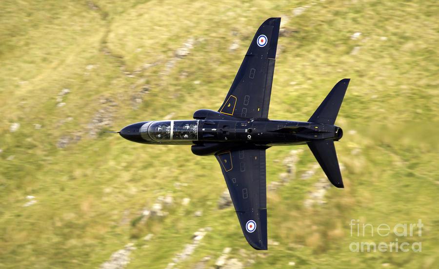 Wales Photograph - Hawk In Mach Loop by Angel Ciesniarska