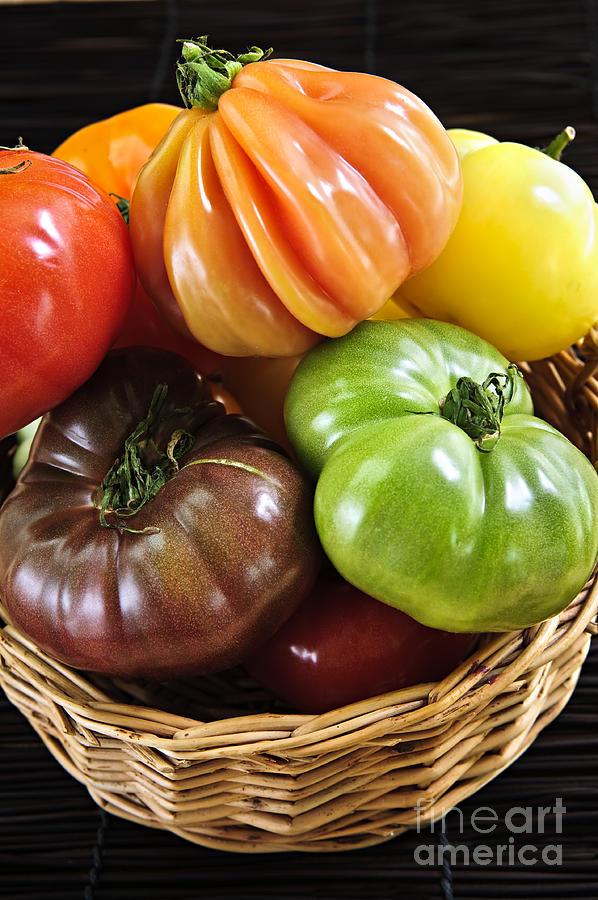 Tomatoes Photograph - Heirloom Tomatoes by Elena Elisseeva