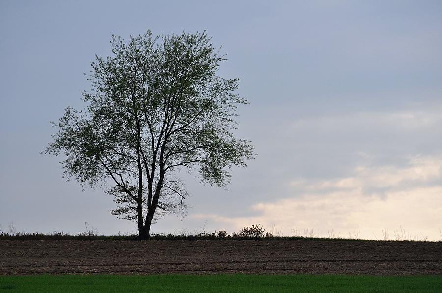 Tree Photograph - Horizon In April by JAMART Photography
