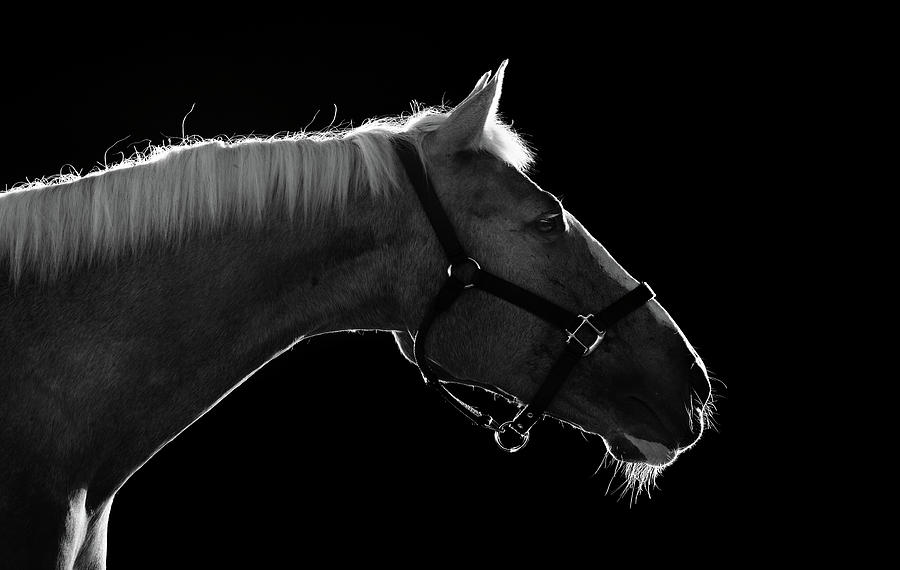 Horizontal photograph horse by arman zhenikeyev professional photographer from kazakhstan