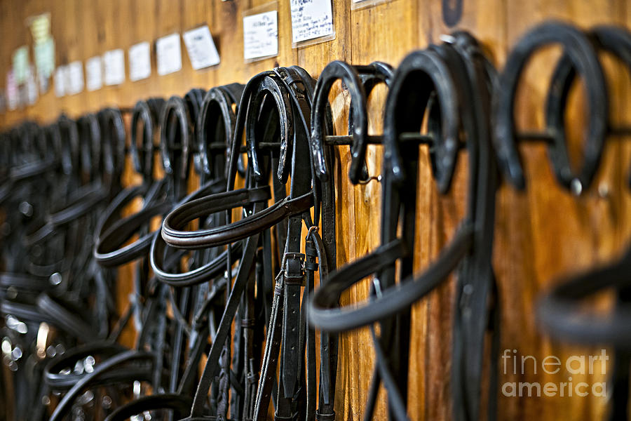 Bridles Photograph - Horse Bridles Hanging In Stable by Elena Elisseeva