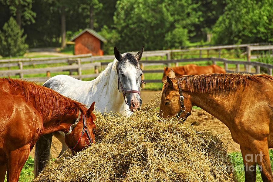 Horse Photograph - Horses At The Ranch by Elena Elisseeva