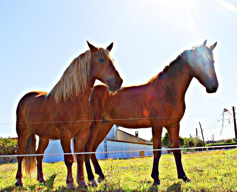 Horses Photograph - Horses by Jenny Senra Pampin