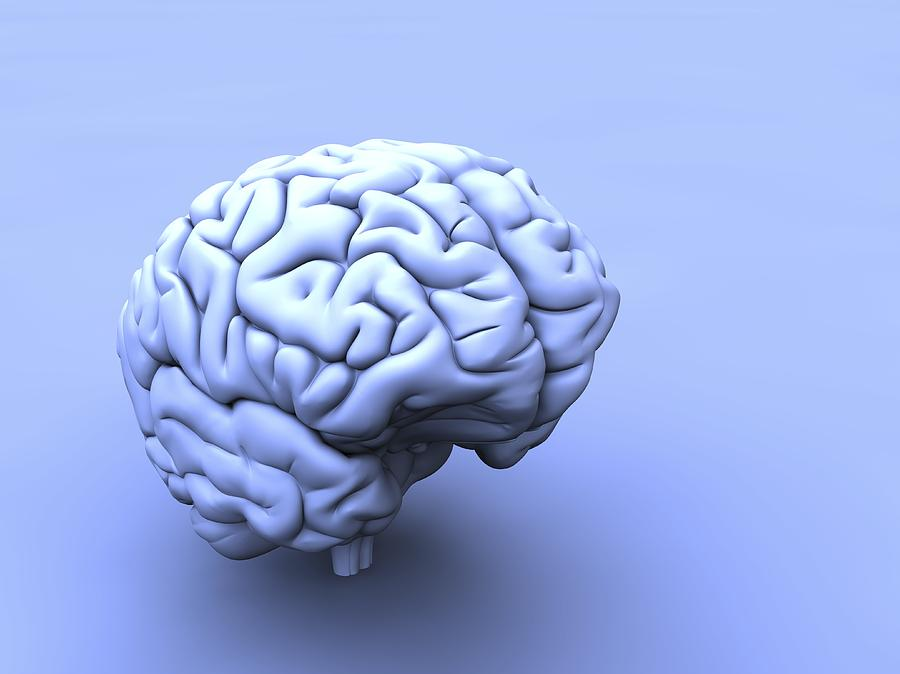 Brain Photograph - Human Brain, Artwork by Pasieka